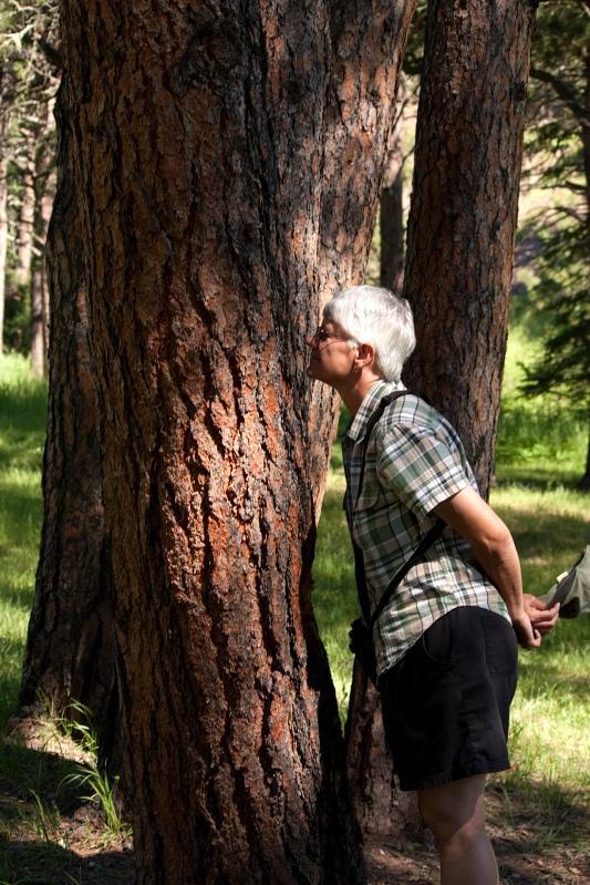 A Ponderosa Pine Kiss