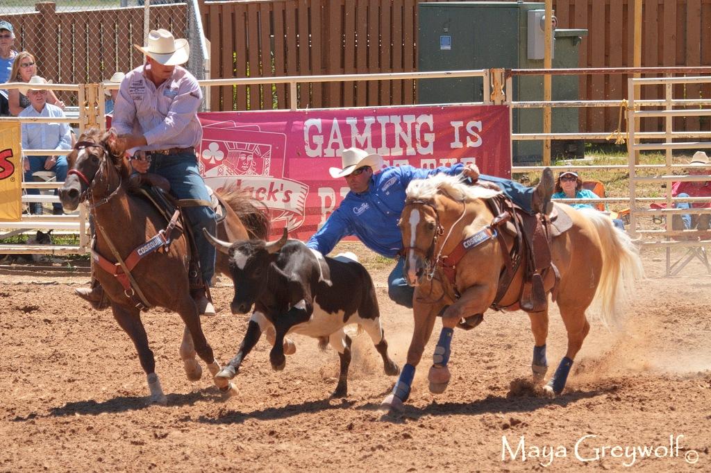 2014 Days of 76 Steer Wrestling 3 (1) Final