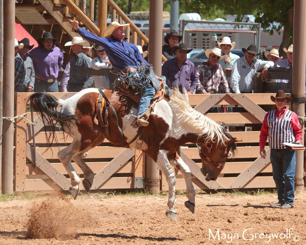 2014 Days of 76 Saddle Bronc Ride 5 (2) Final