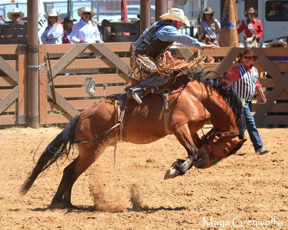 2014 Days of 76 Saddle Bronc Ride 6 (3) Final