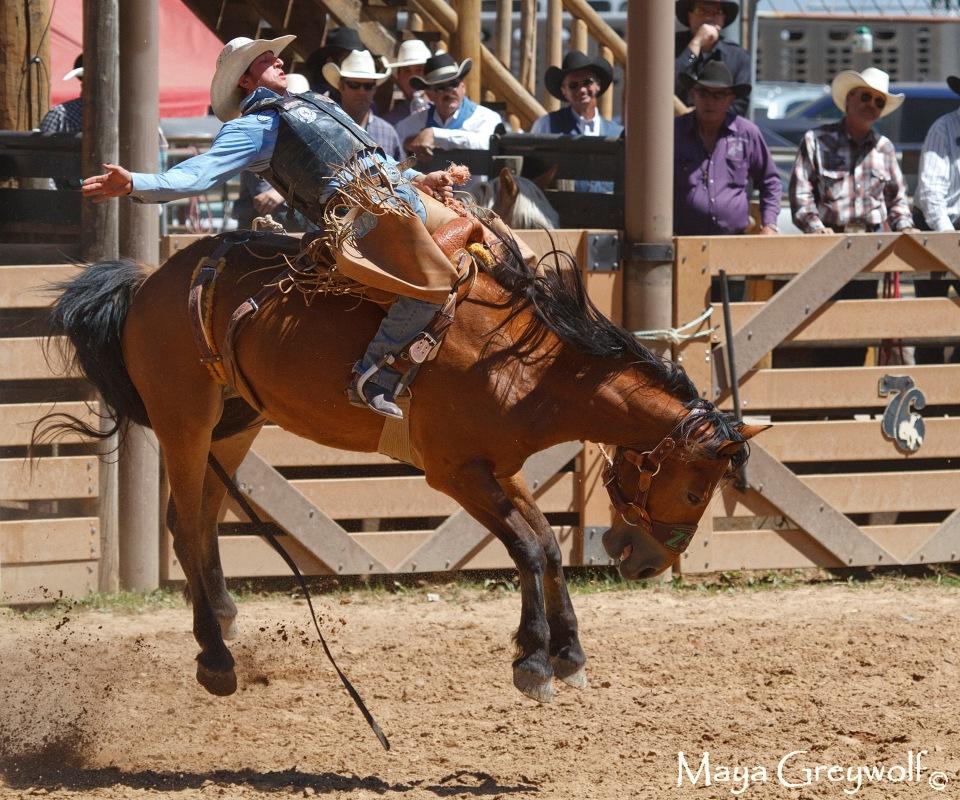 2014 Days of 76 Saddle Bronc Ride 6 Final
