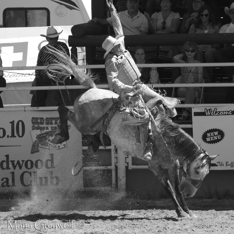2014 Days of 76 Saddle Bronc Ride 7 (1) B&W Final